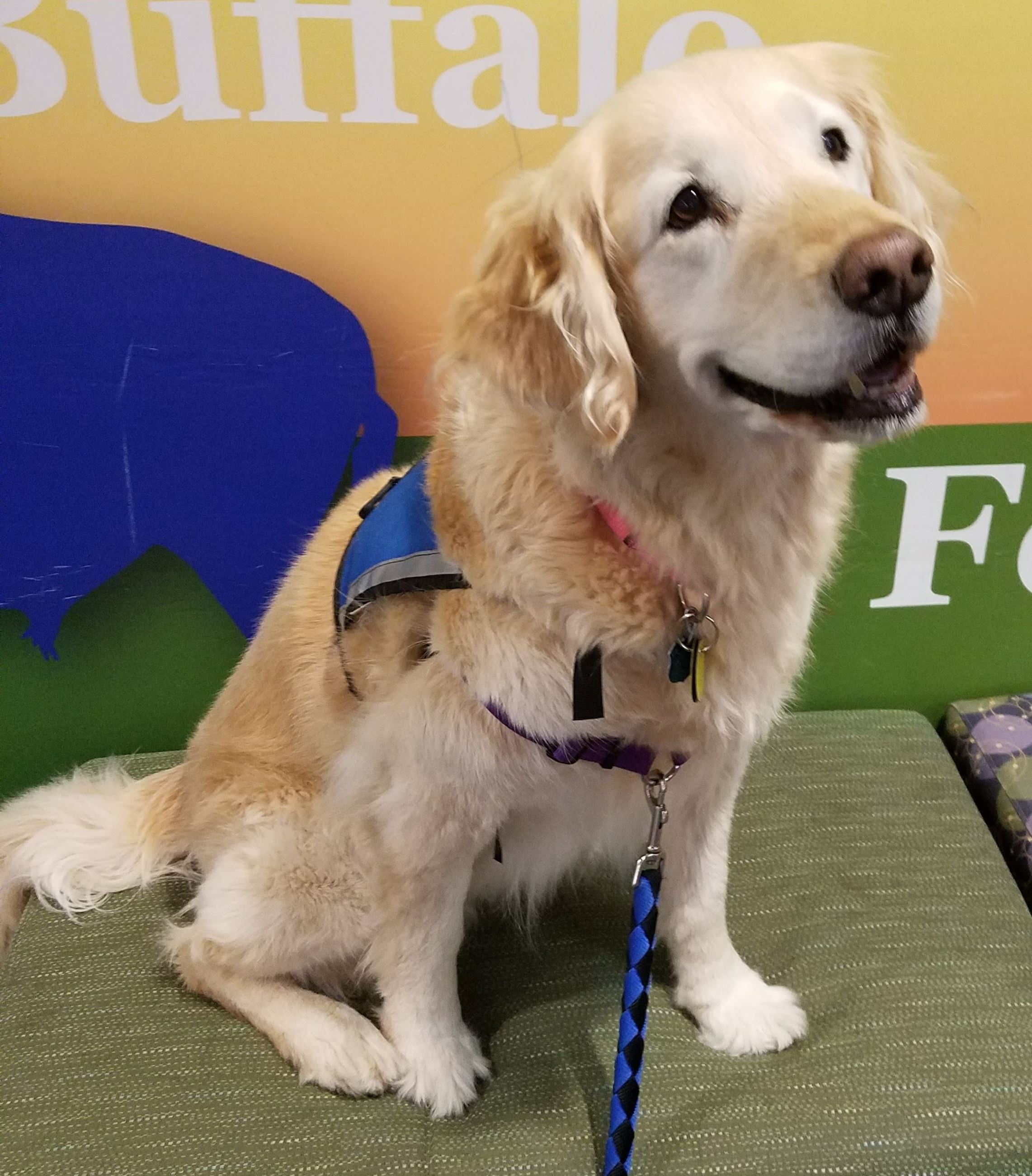 Children can read to gentle therapy dogs